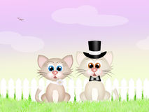 Marriage of cats Royalty Free Stock Photo