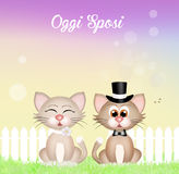 Marriage of cats Royalty Free Stock Photos