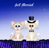 Marriage of cats Stock Photos