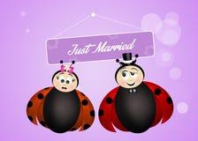 Marriage of ladybugs Stock Image