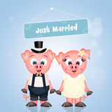 Marriage of pigs Stock Images