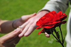 Marriage symbol of love. Red rose and marriage symbol of love Stock Photos