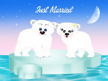Marriage of white bears Stock Images
