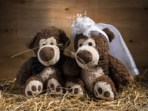 Marriageable teddy bears Stock Images
