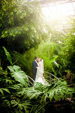 Married couple kissing on sunny day at rain forest Royalty Free Stock Photography
