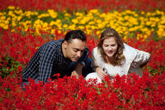 Married couple looking at flowers in park Stock Image