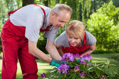 Married couple take care of the flowers Royalty Free Stock Photography