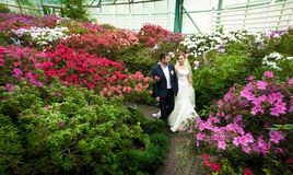Married couple walking among trees in flowers Stock Photo