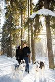 A married couple walks in the winter with the Siberian Husky dogs. A married couple in winter walks in a park with Siberian Husky dogs Stock Images