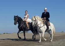 Marrieds och hästar royaltyfria bilder
