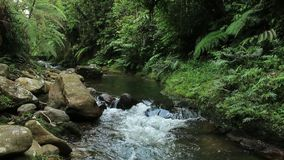 Marrom claro da cor, do c?rrego tropical da floresta ou do rio com vegeta??o verde lux?ria e os grandes bolders filme