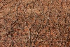 Marrom coberto de vegetação dos ramos da parede de tijolo fotografia de stock