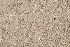 Marrom da grão na praia Fotos de Stock