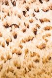 Marrom e claro abstratos - fundo marrom da textura Imagens de Stock