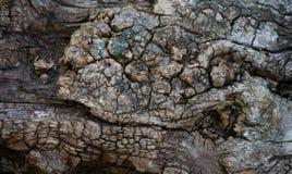 Marrom velho da quebra do teste padrão do fundo da textura da casca fotografia de stock royalty free