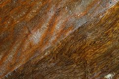 Marrone di legno su fondo Immagini Stock Libere da Diritti
