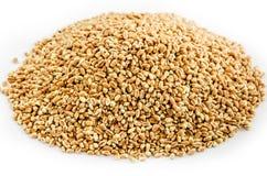 Marrone dorato del fondo del frumento Immagini Stock Libere da Diritti
