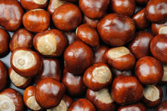 Marrons d'Inde image stock