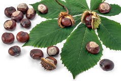 Marrons d'Inde Photographie stock
