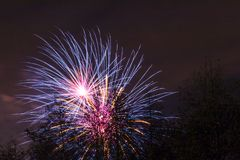 Marrons dans Forest Fireworks national Photographie stock