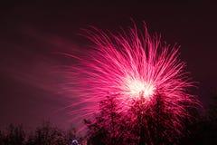 Marrons dans Forest Fireworks national Image stock
