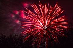 Marrons dans Forest Fireworks national photo stock