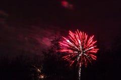 Marrons dans Forest Fireworks national Images libres de droits