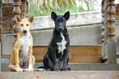 2 marrons e cães pretos da rua Foto de Stock
