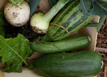 Marrow and courgette and onion royalty free stock photography