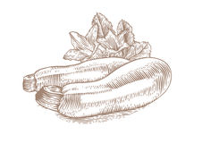 Marrow squash with flowers and leaves. Drawing of two marrow squashes with flowers and fresh green leaves Stock Photos