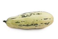 Marrow on a white background. Green marrow on a white background Stock Image