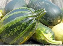 Marrows. Some large green vegetable marrows royalty free stock image