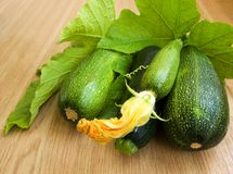 Marrows Royalty Free Stock Photos