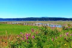 Marrowstone island. Olympic Peninsula. Washington State. Marsh land with sal water and northwest wild flowers royalty free stock photo