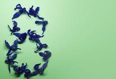 8 mars des fleurs bleues sur un fond vert clair Carte de voeux avec des fleurs Fond avec la place pour votre texte Photo libre de droits