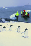 Mars des pingouins Photographie stock libre de droits