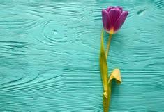 8 mars, jour du ` s de mère, tulipes sur le fond bleu Photos libres de droits