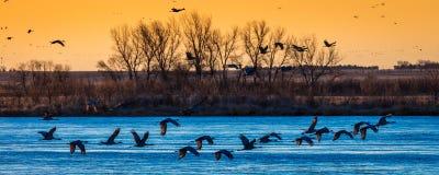 8 mars 2017 - la volaille de l'eau d'île grande, Nébraska - de PLATTE de RIVIÈRE, ETATS-UNIS et les grues migratrices de Sandhill Photographie stock libre de droits