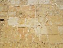 marsa вытравливания быка alam Стоковое Фото