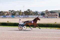Marsa Horse Racing Track. Stock Photo