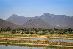 African fields flooded with water, palm trees and mountains stock photos