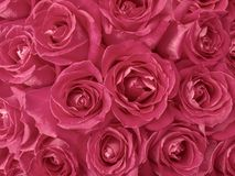 Marsala toned roses bouquet Royalty Free Stock Image