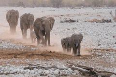 Marsch för elefantfamiljgrupp till och med öken Arkivfoton