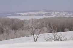 marsch Snön mousserar Arkivbilder
