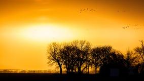 MARSCHERA 8, för 2017 - utvandrande vattenfågel för den storslagna ön, Nebraska - PLATTE FLOD, FÖRENTA STATERNA, och Sandhill kra Royaltyfri Fotografi