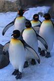 Marschierende Pinguine Stockfoto