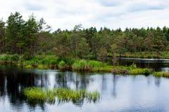 Marschland und Wasser Stockfoto