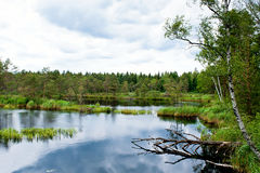 Marschland und Wasser Lizenzfreies Stockfoto