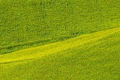 Marsen (Italië) - Gebied van zonnebloemen Stock Foto's