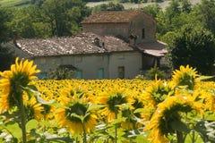 Marsen (Italië) - Landschap bij de zomer royalty-vrije stock afbeeldingen